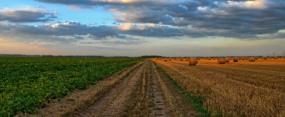 Imprenditori agricoli professionali